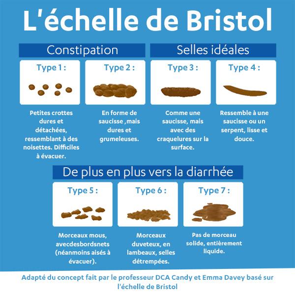 DIARRHÉE - Definiția și sinonimele diarrhée în dicționarul Franceză - Diarrhee c est quoi